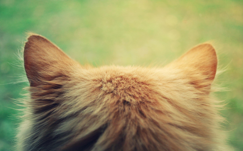 cat ears head