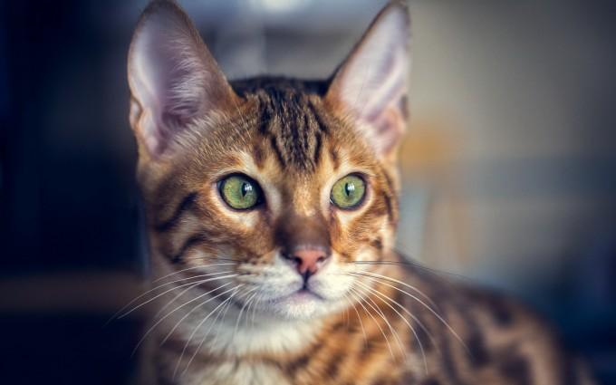 cat ears whiskers eyes