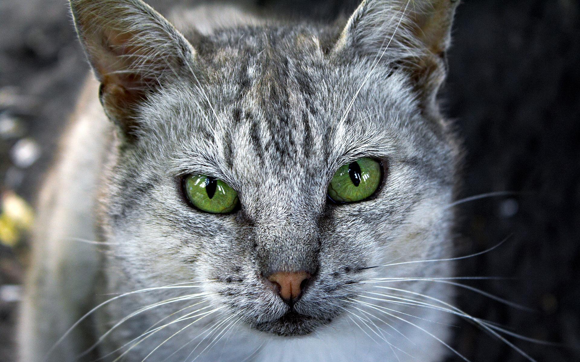 cat eye wallpaper