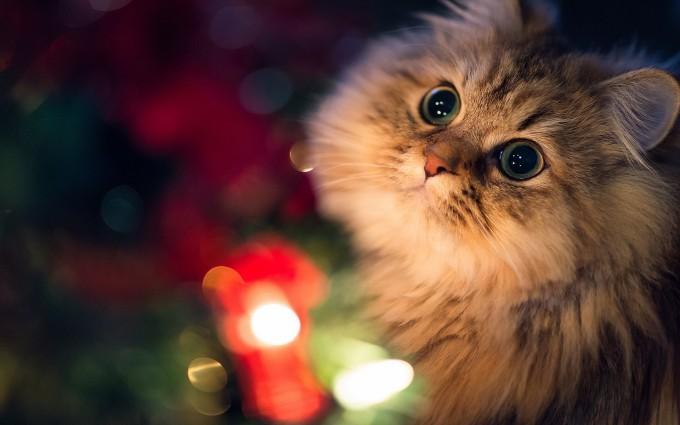 cat eyes big