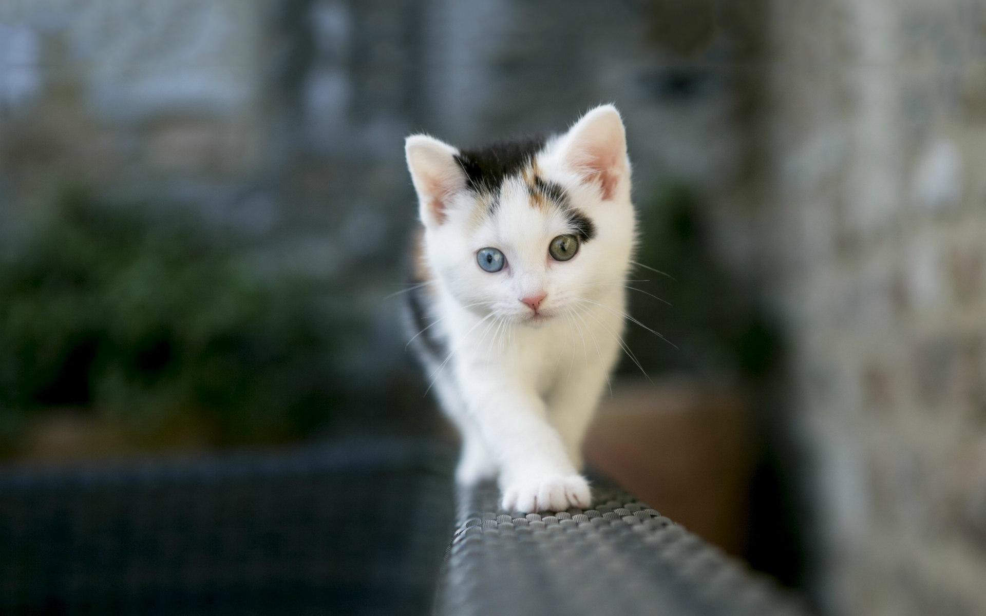 cat eyes blue