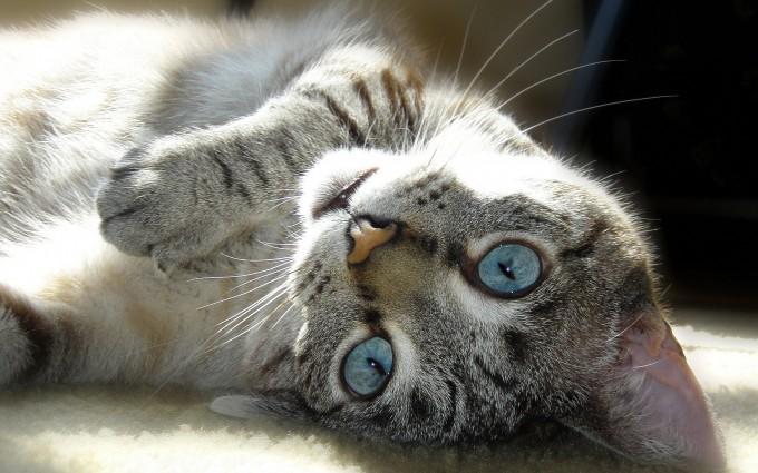cat eyes cute