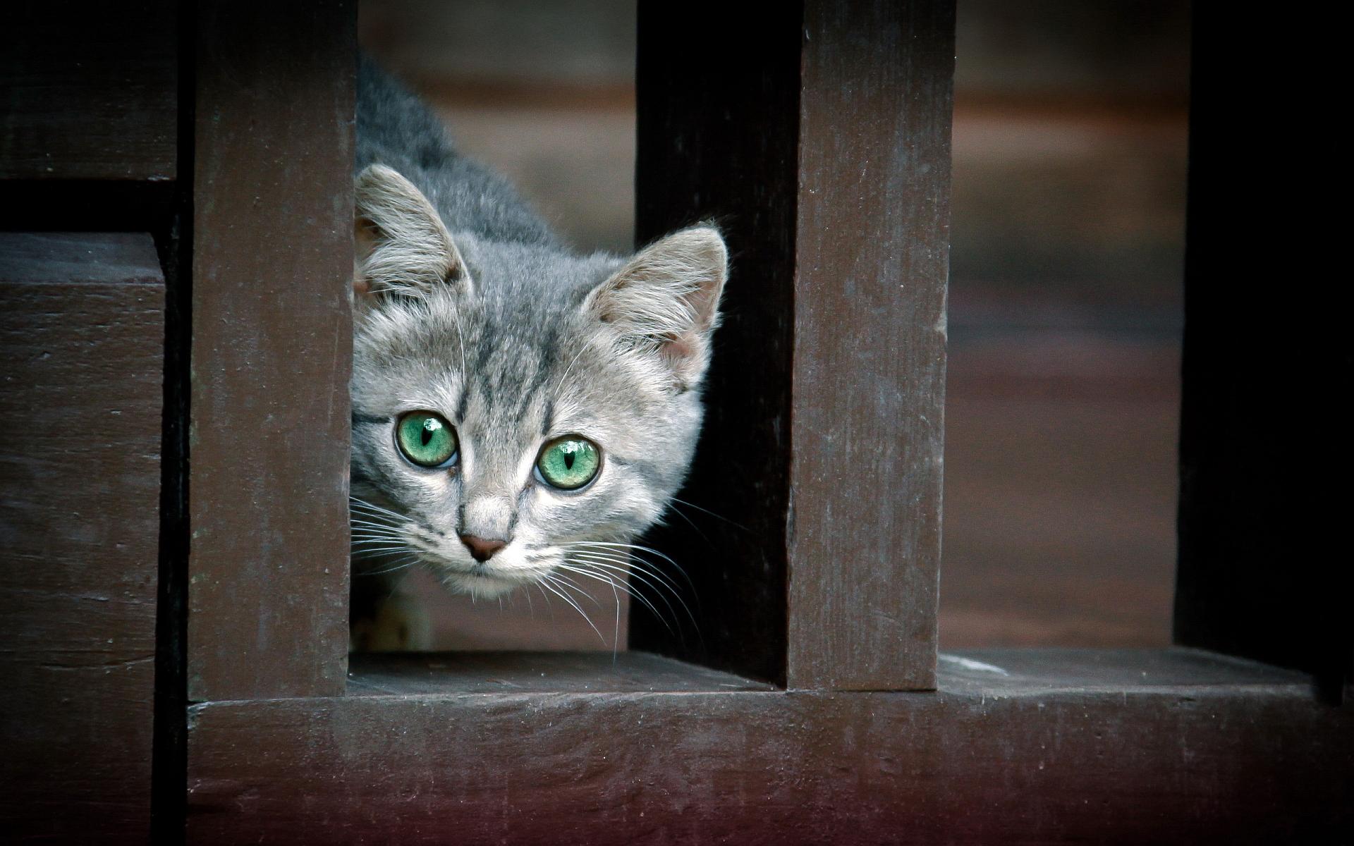cat eyes green cute