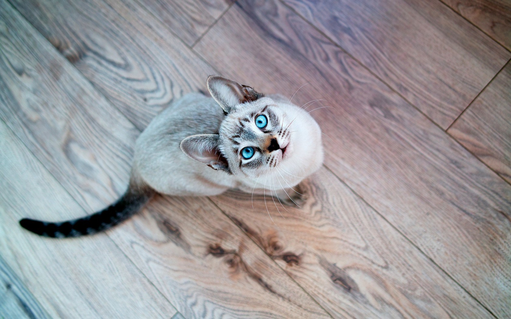 cat eyes hd