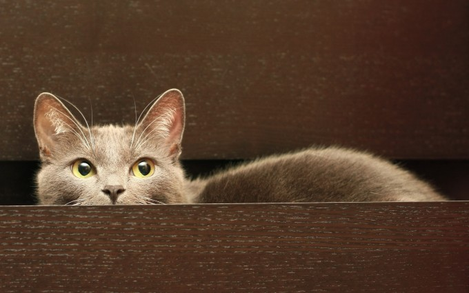 cat eyes hiding