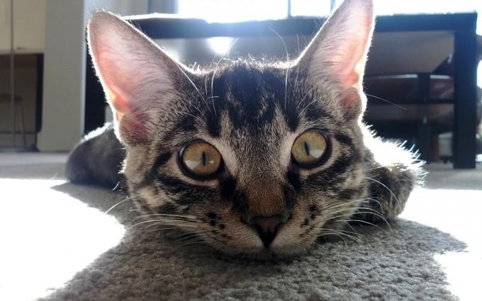 cat eyes home