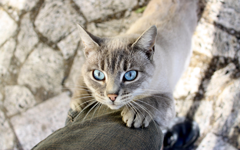 cat eyes light blue