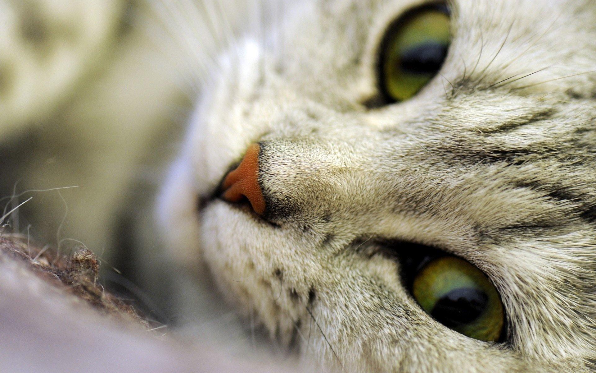 cat eyes macro