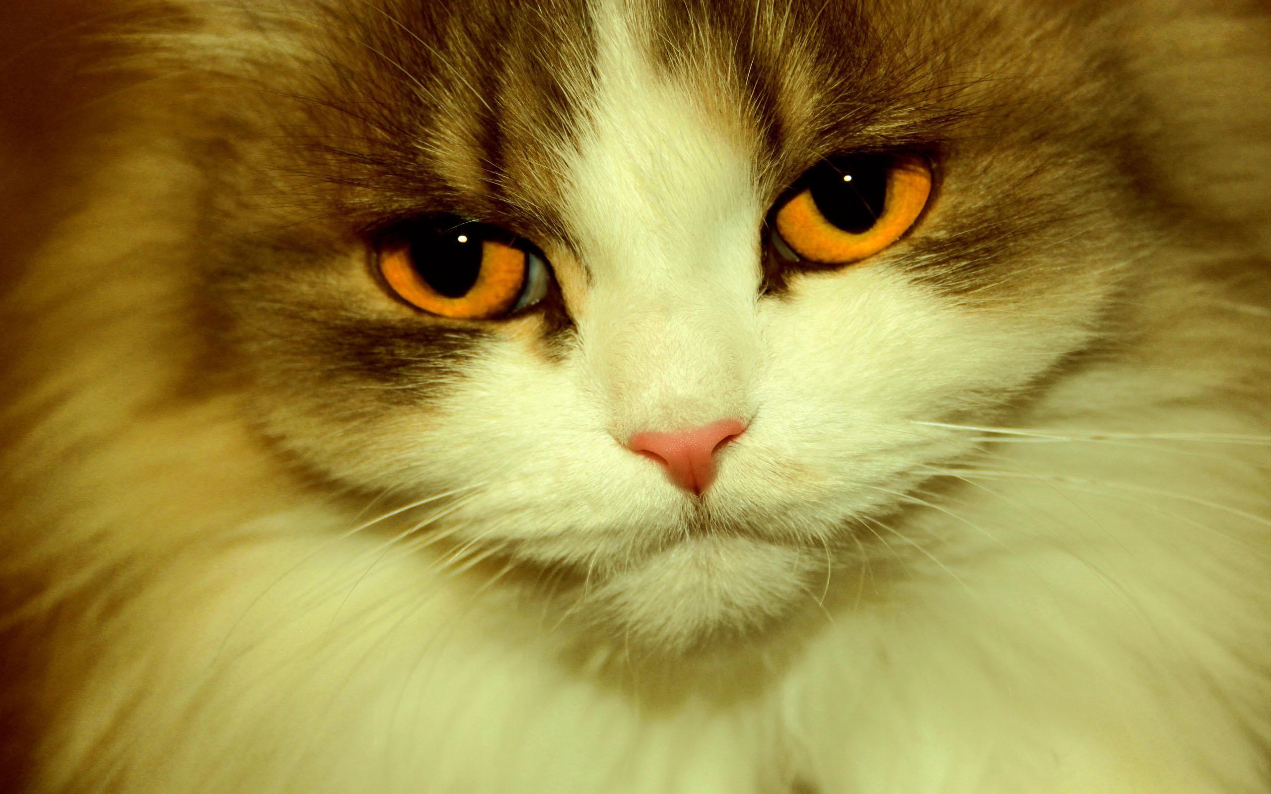 cat eyes orange