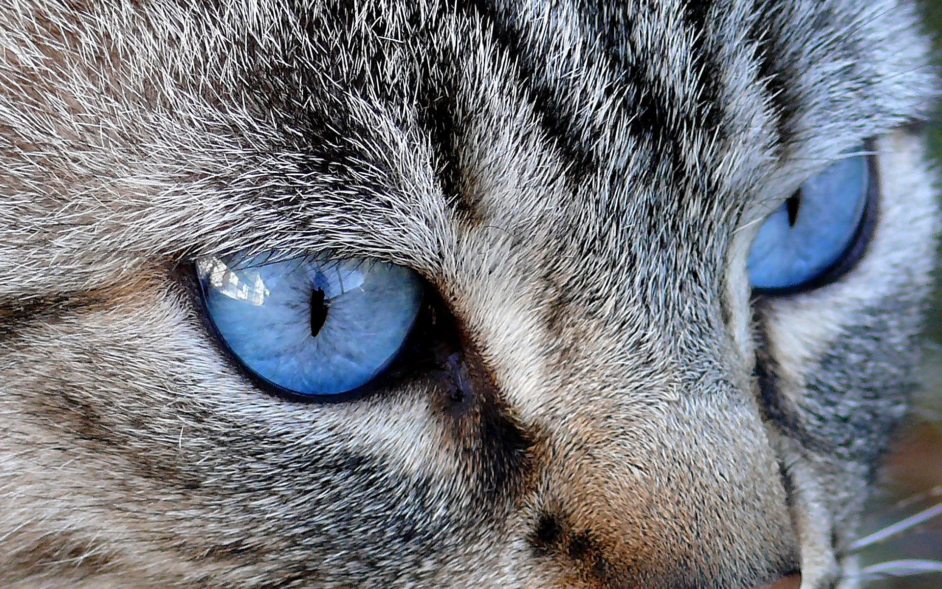 cat eyes wallpaper