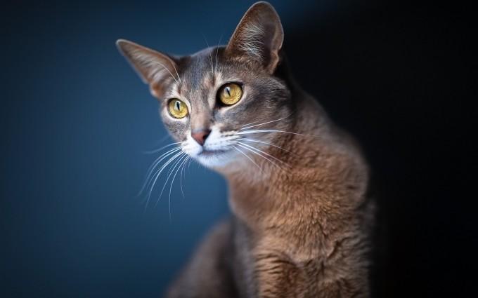 cat eyes yellow