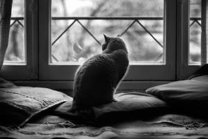 cat guarding
