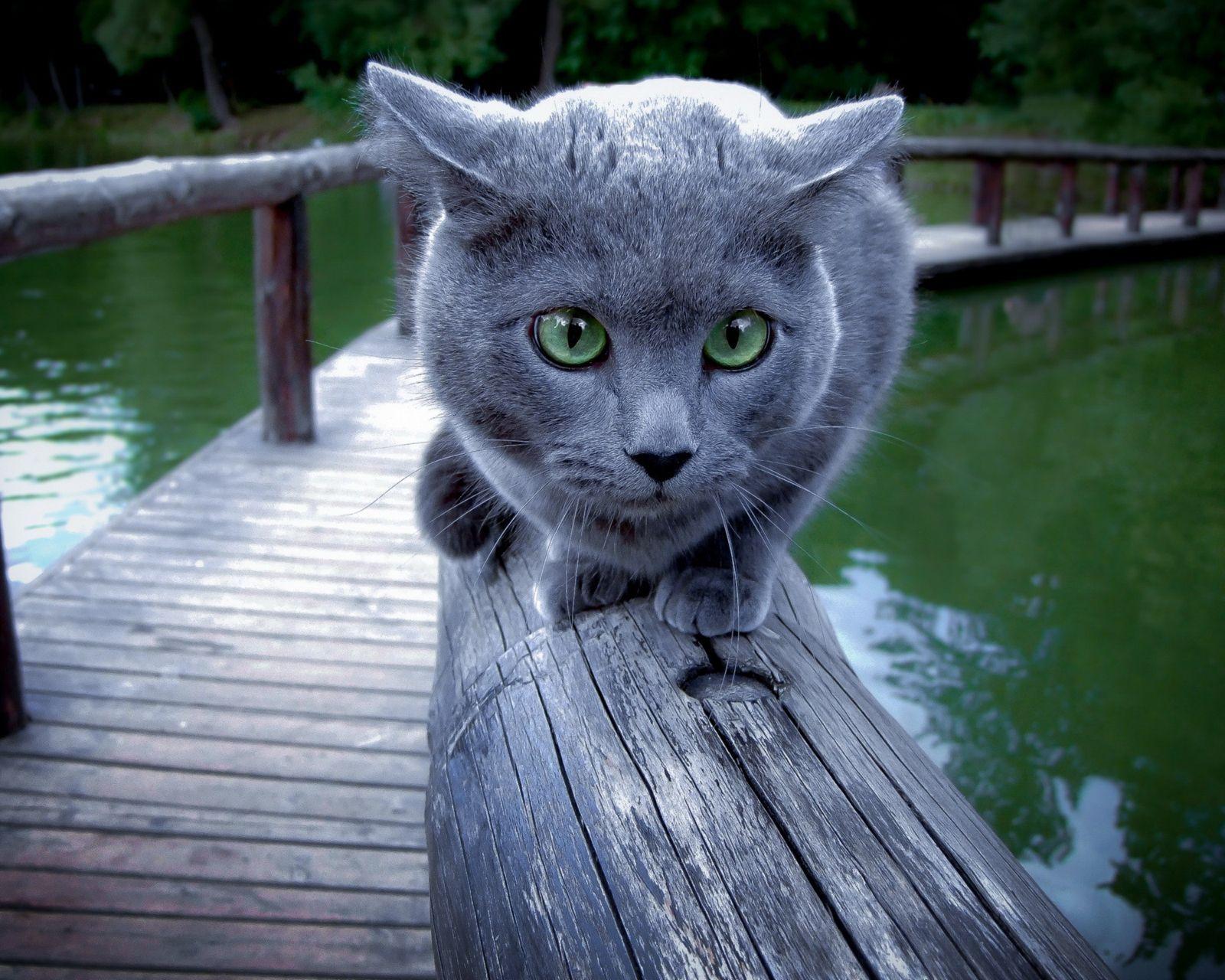 cat hd photo