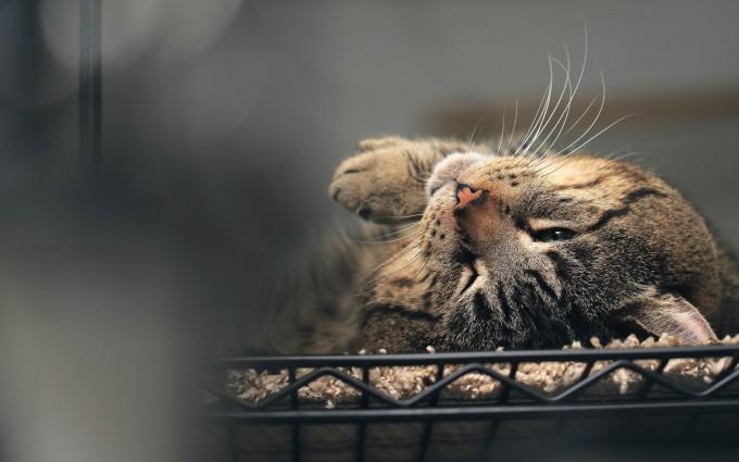 cat hd photos