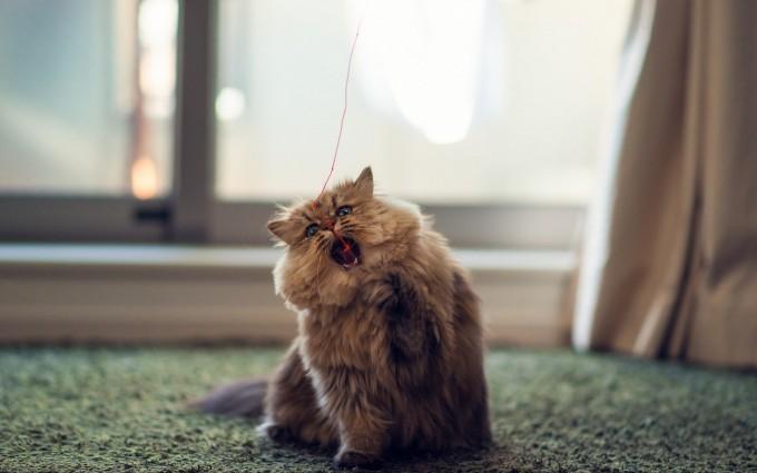 cat hd pic