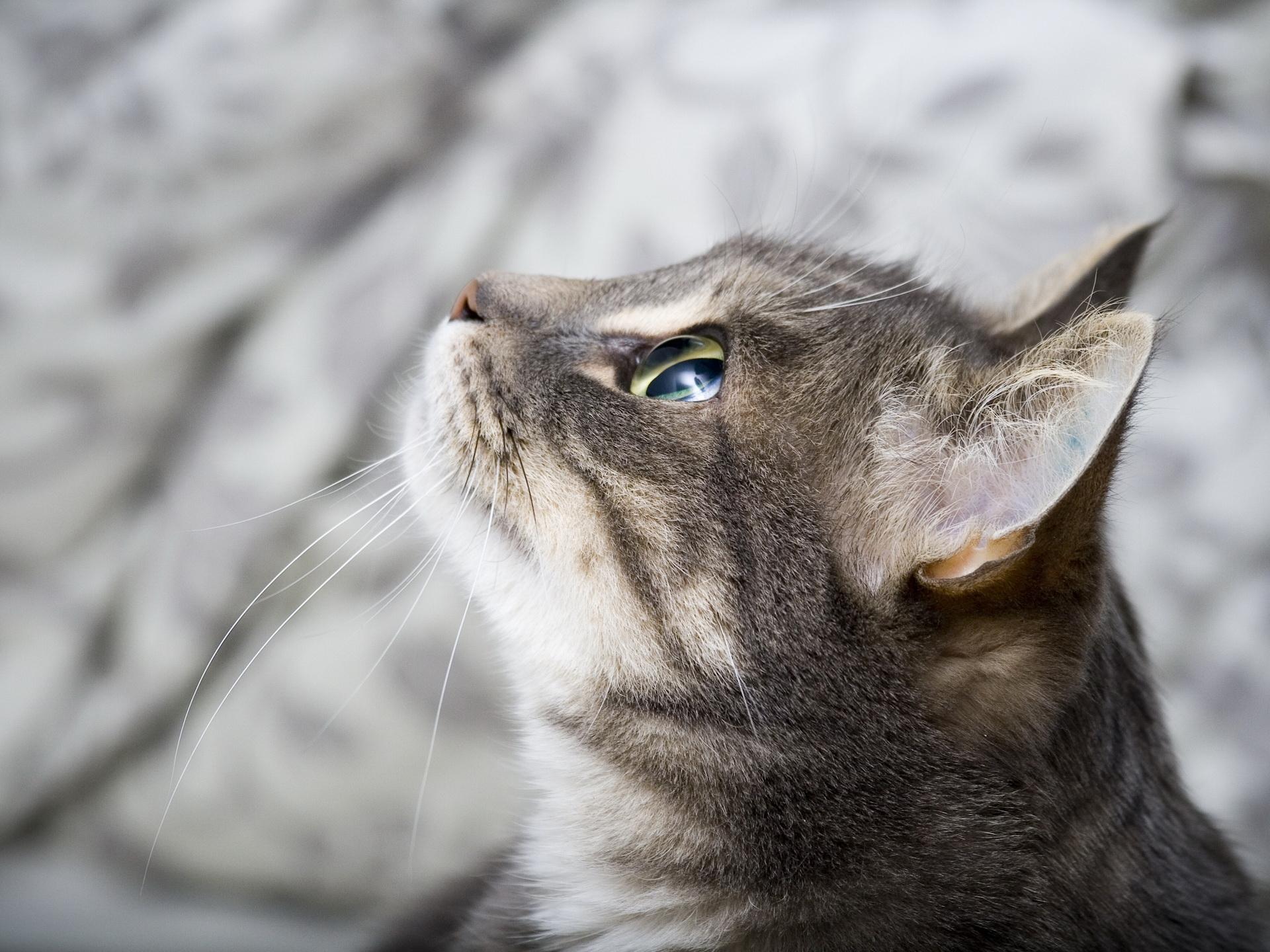 cat hd picture