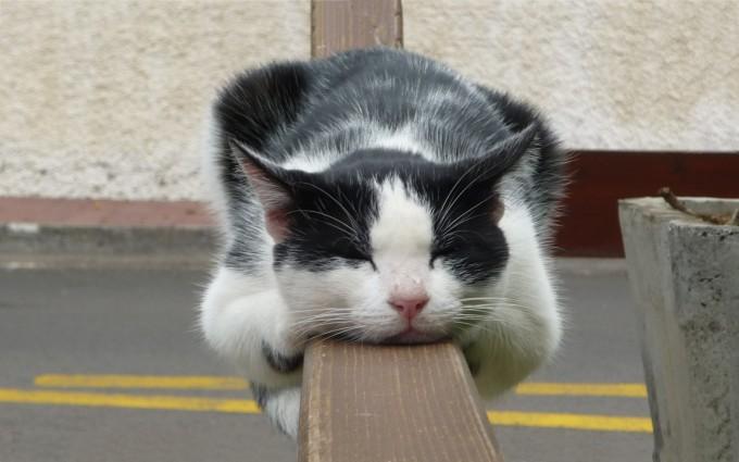 cat hd wallpaper
