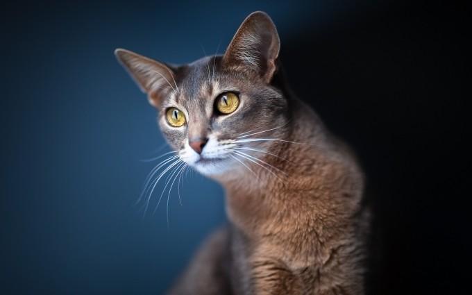 cat hd wallpaper download