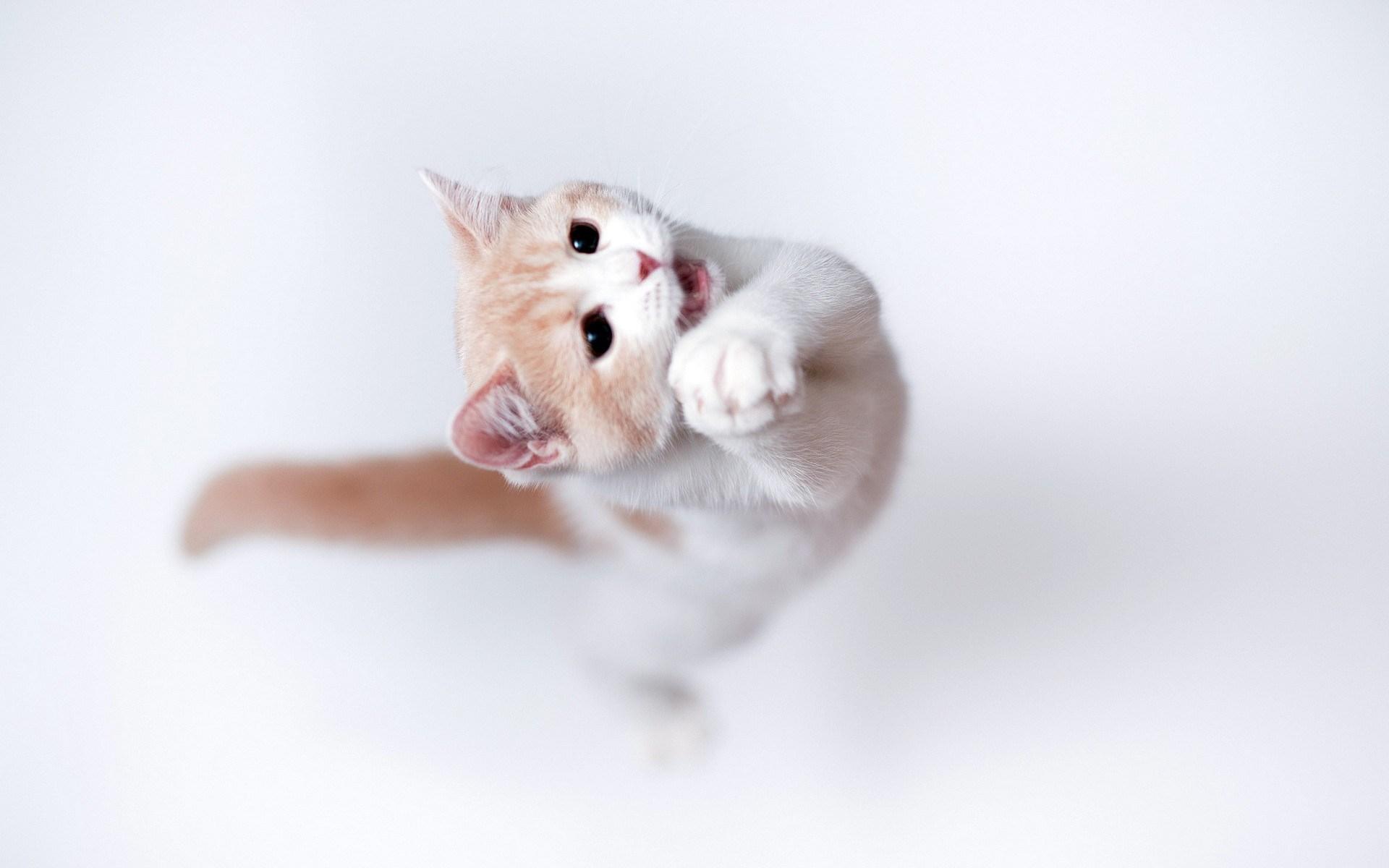 cat jump
