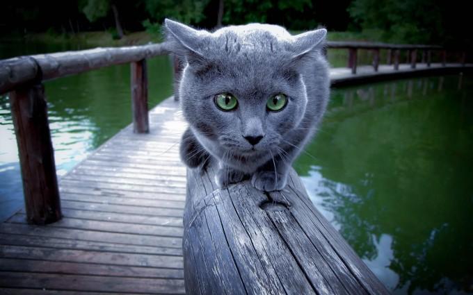 cat on desktop