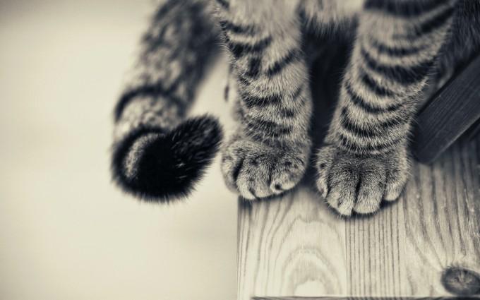 cat paws wallpaper