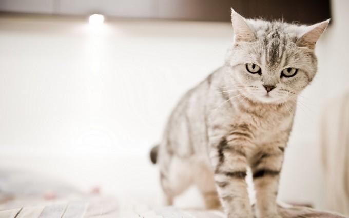 cat photo hd