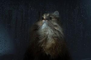 cat pic hd