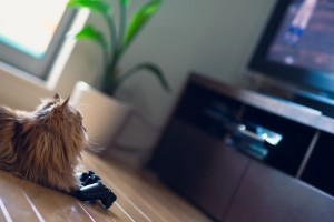 cat playing games
