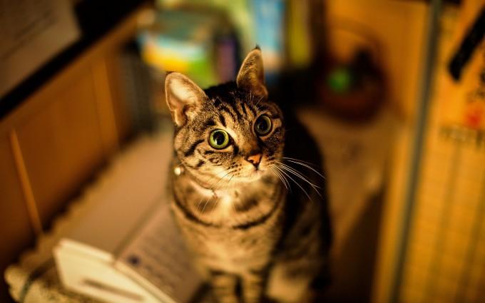 cat pop eyes