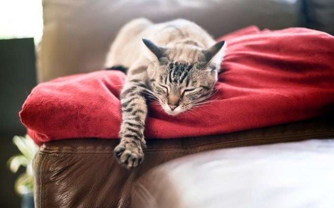 cat sleeping tired