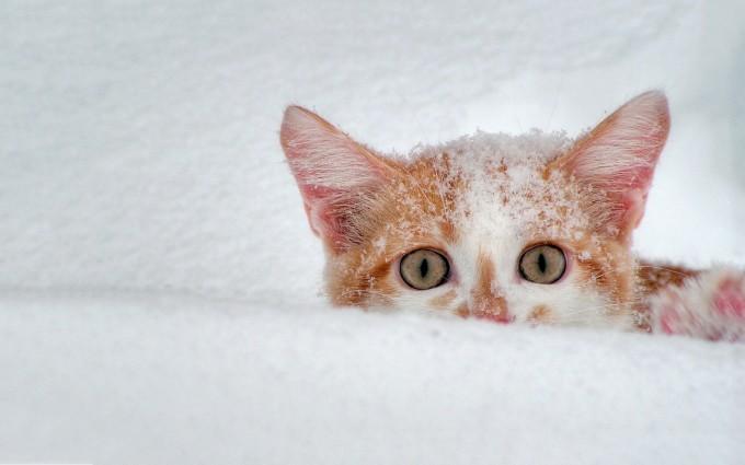 cat snow