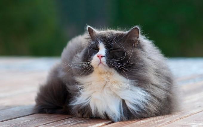 cat sweet hd