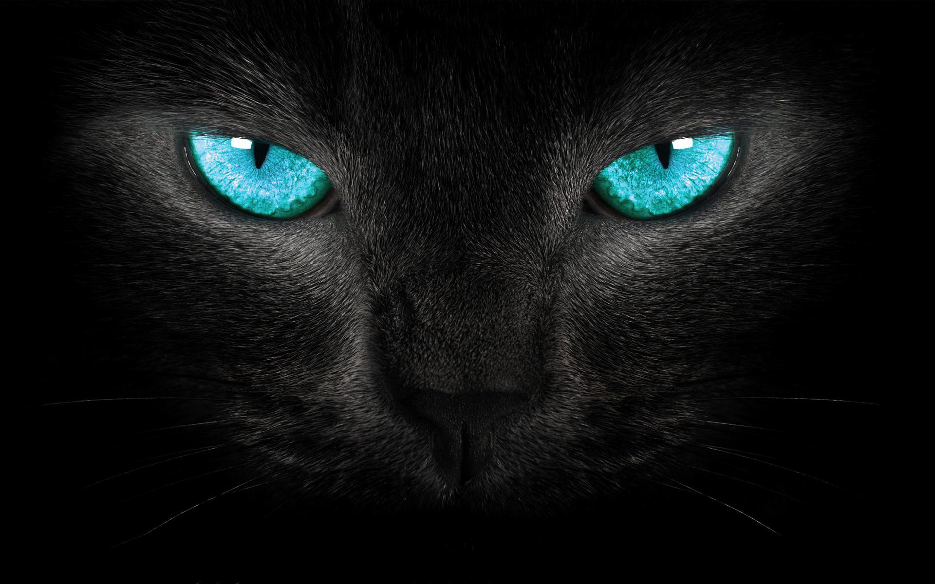 cat turquoise eyes