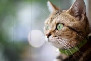 cat wallpaper download