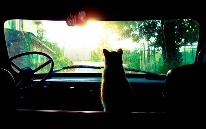 cat wallpaper download free