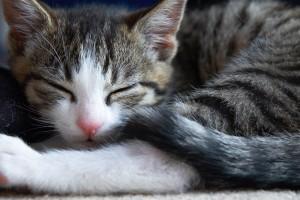 cat wallpaper free download