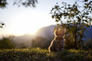 cat wallpapers download