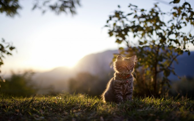 cat wallpapers download
