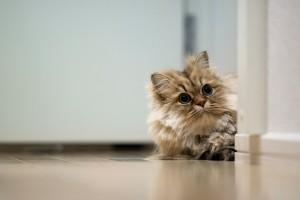 cat wallpapers for desktop