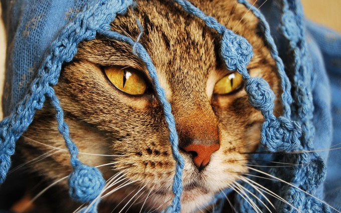 cat wallpapers free download