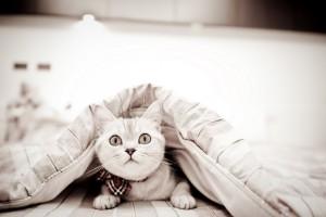 cat wallpapers hd