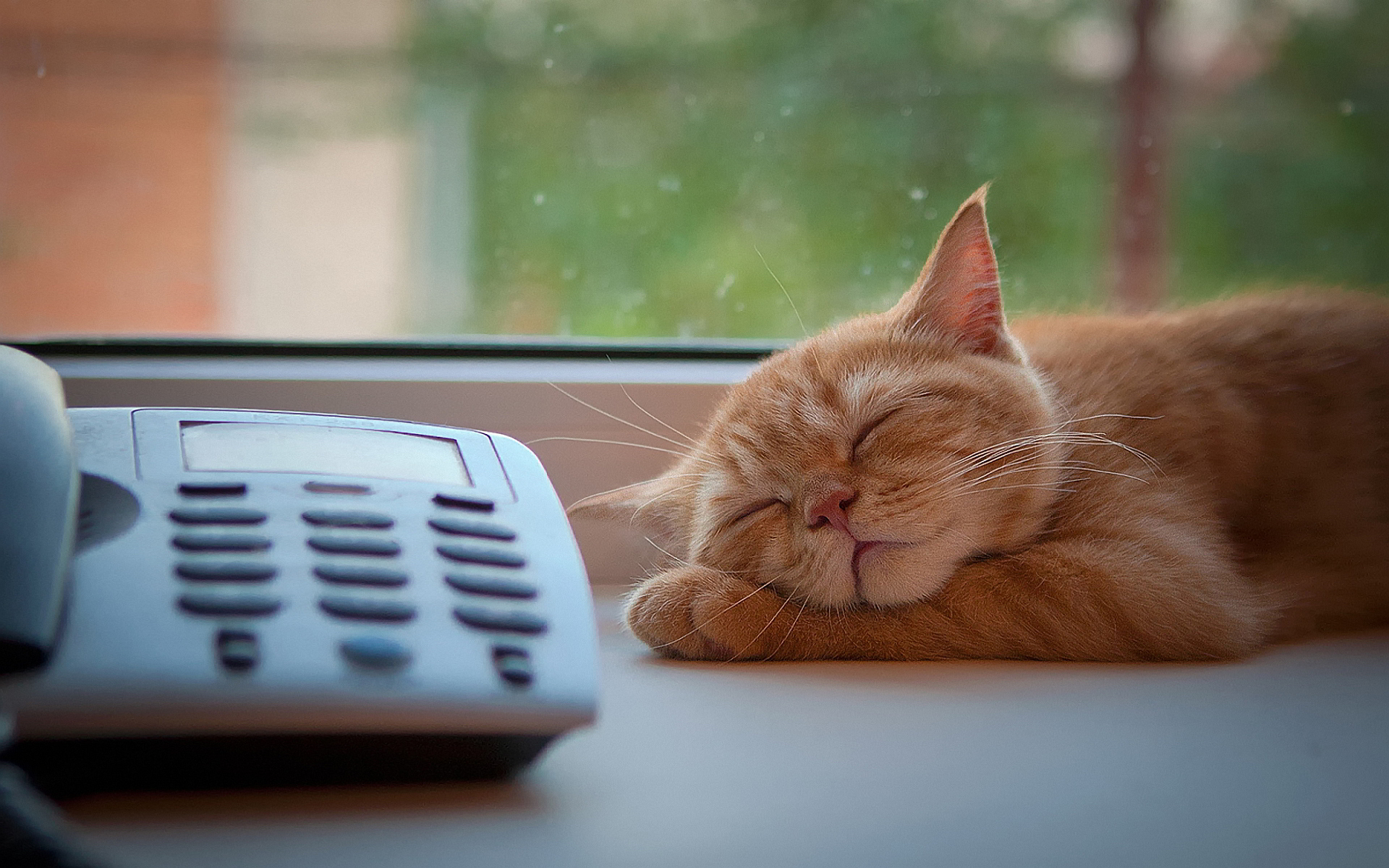 cat widescreen download