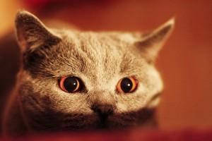 cats eyes wallpaper
