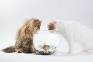 cats fish