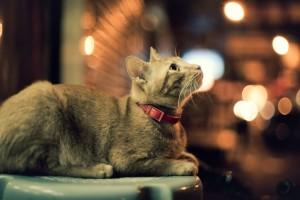 cats hd wallpaper