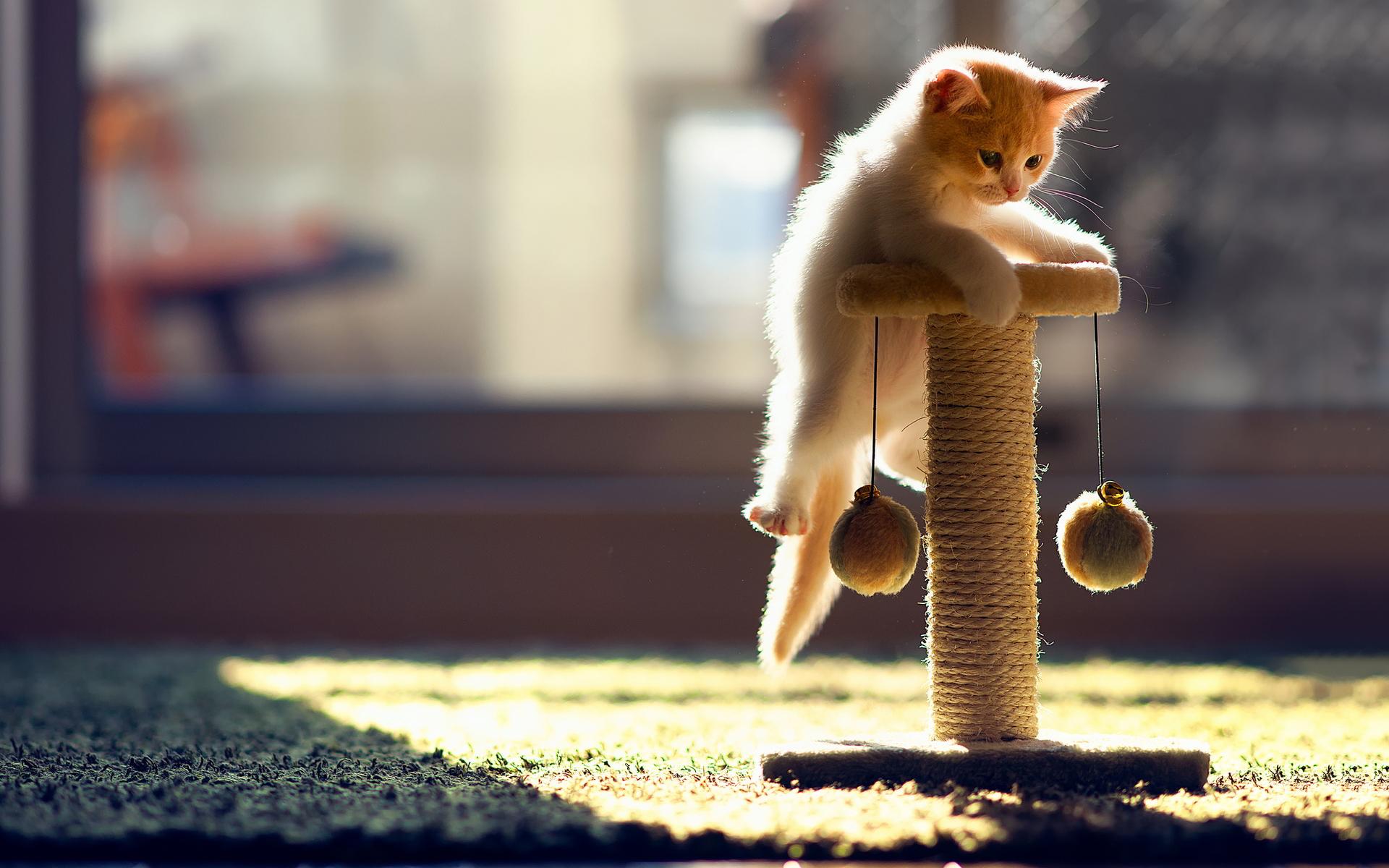 cats on desktop