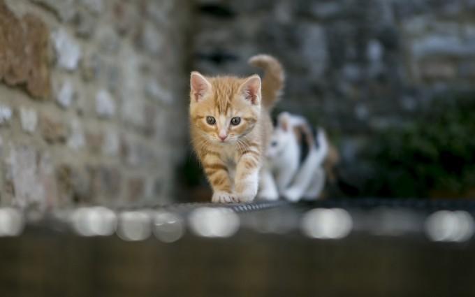 cats wallpaper cute