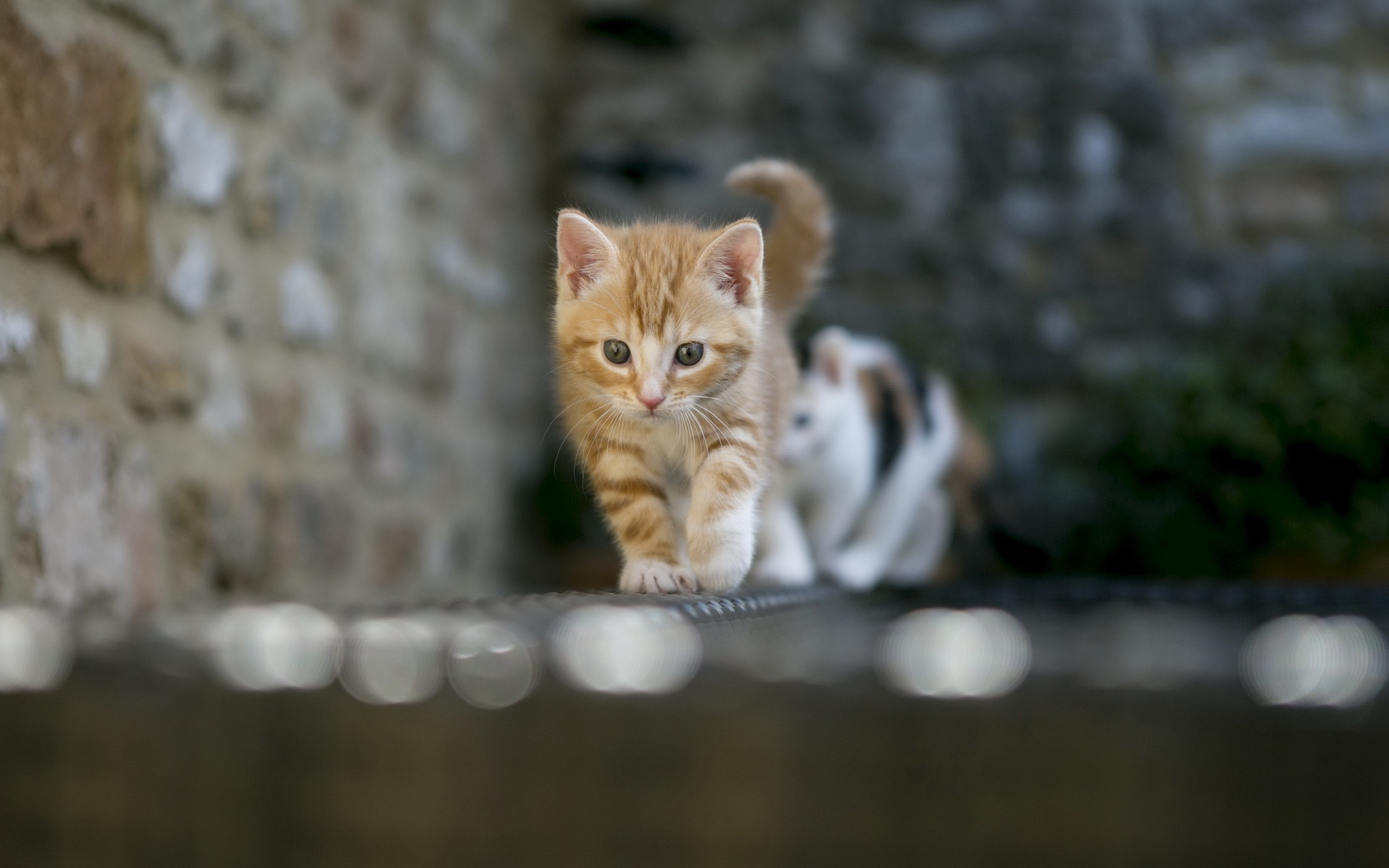 cats wallpaper cute