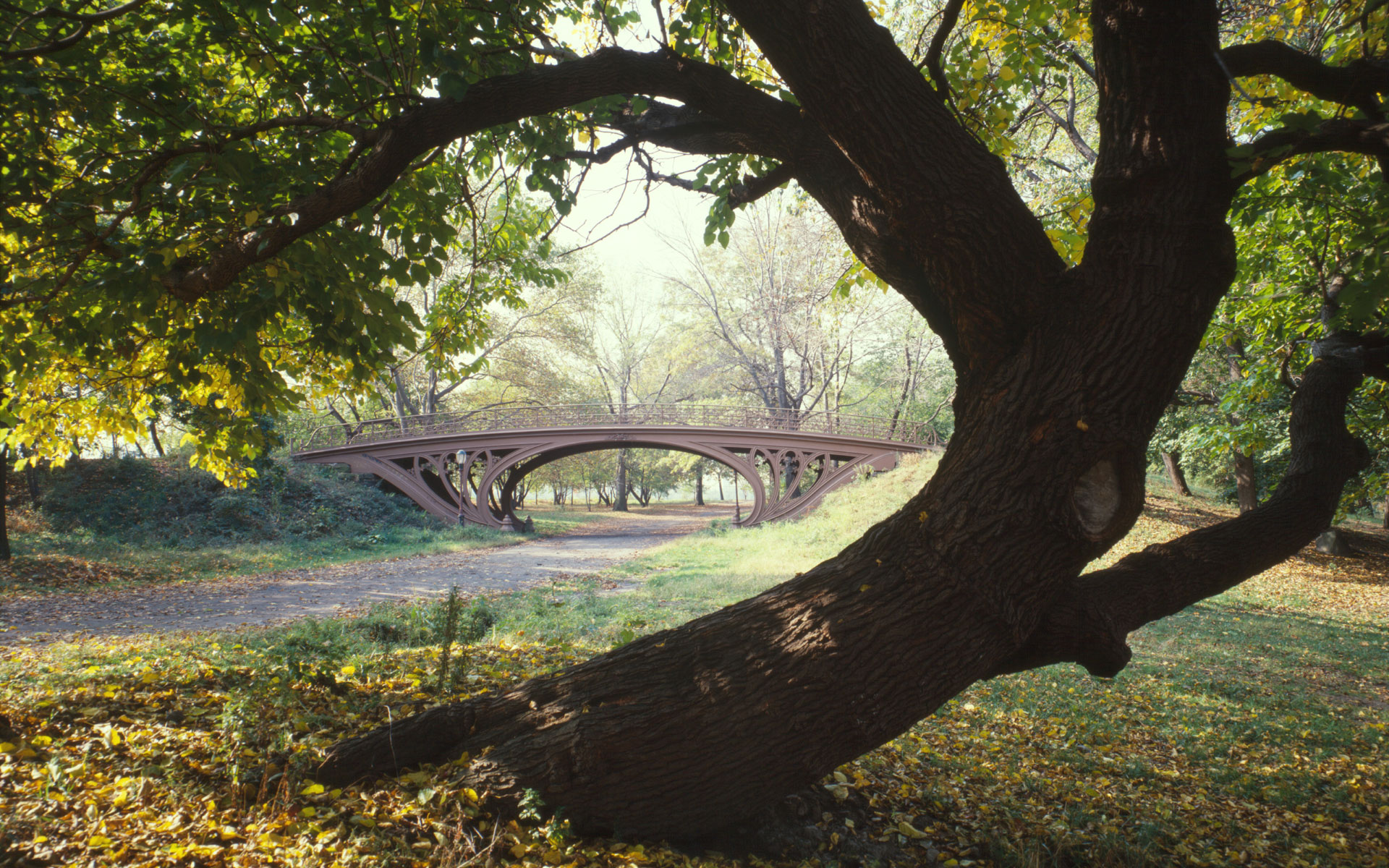 central park wallpaper nature