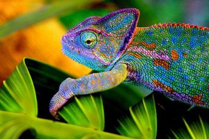 chameleon wallpapers 3d